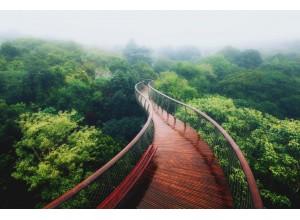 Адреналин в крови - Подвесные мосты Канопи, Борнео
